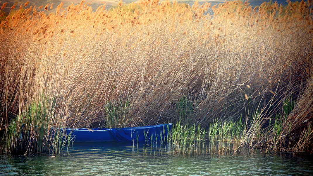 Boot im Schilf